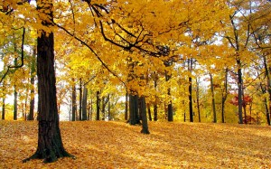 beautiful-autumn-leaves-wallpapers